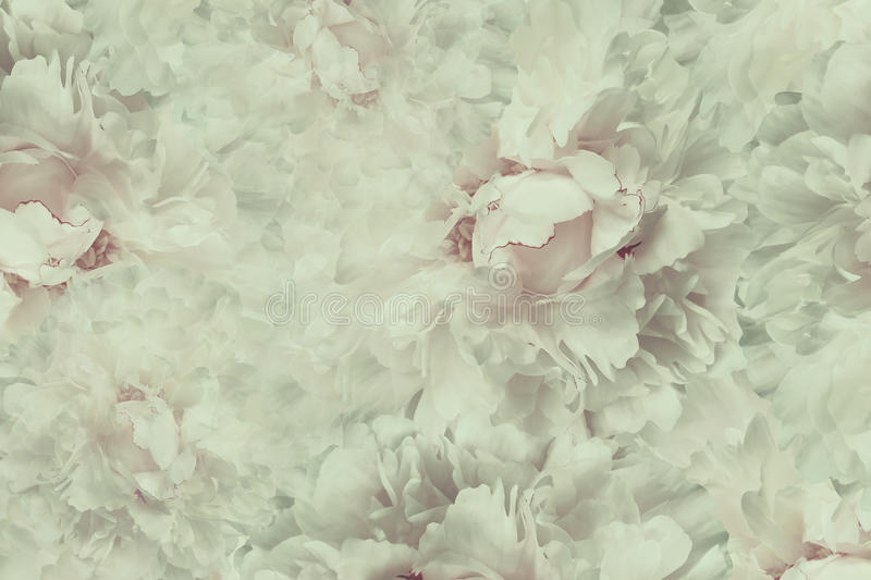 Floral vintage beautiful background. Wallpapers of flowers light pink-white peony. Flower composition. Close-up. stock photo