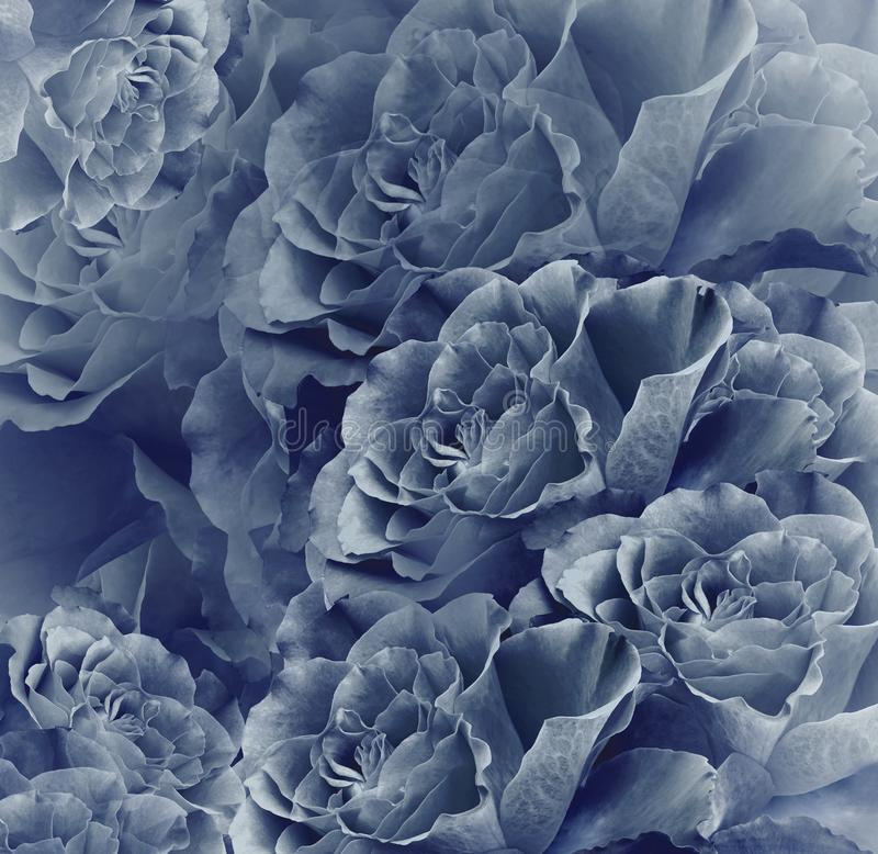 Floral vintage blue beautiful background. Flower composition. Bouquet of flowers from dark blue roses. Close-up. Nature stock image