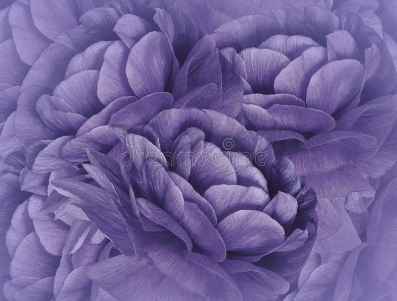 Floral violet background. A bouquet of purple flowers. Close-up. floral collage. Flower composition. royalty free stock photos