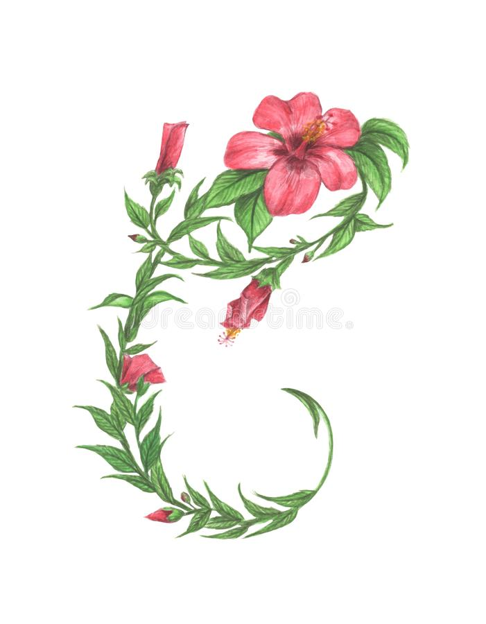 Floral Watercolor Alphabet. Letter C Made of Flowers. royalty free illustration