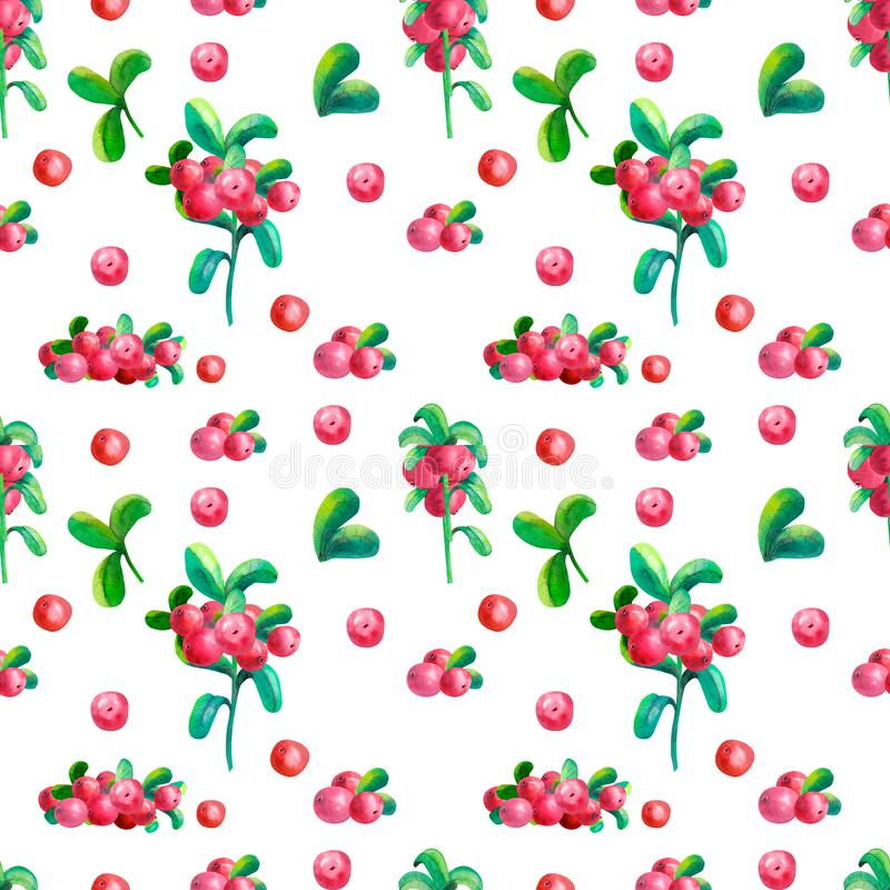 Floral watercolor illustrations. Colorful seamless pattern wallpaper with branches, leaves and cowberry berries on the white royalty free illustration