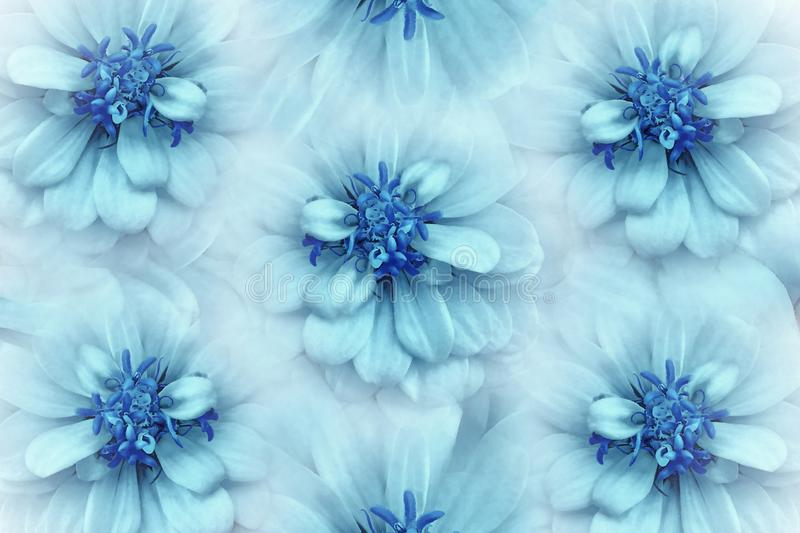 Floral watercolor turquoise-blue background. Flowers daisies close-up on a light turquoise background. Flowers composition. Nature stock photo