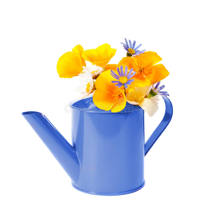 Download Floral Watering Can stock photo. Image of metal, blue - 15222460