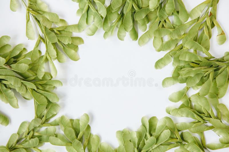 Floral wreath made of beautiful green leaves. royalty free stock photos
