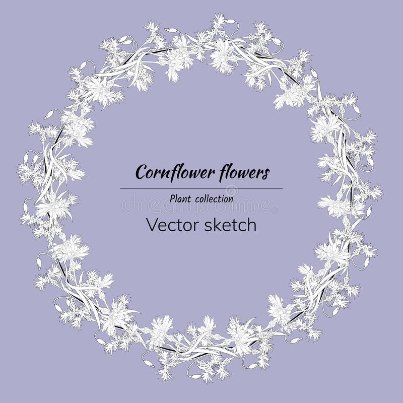 Floral wreath of white contour knapweed. Spring flowers drawn in ink by hand royalty free illustration