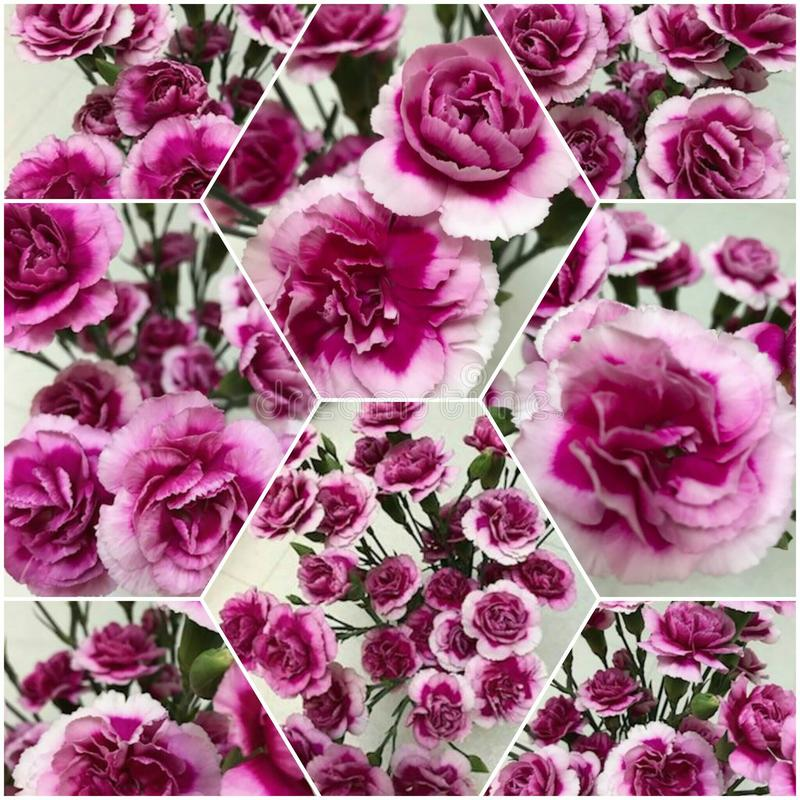 FloralBeauty 免版税库存照片