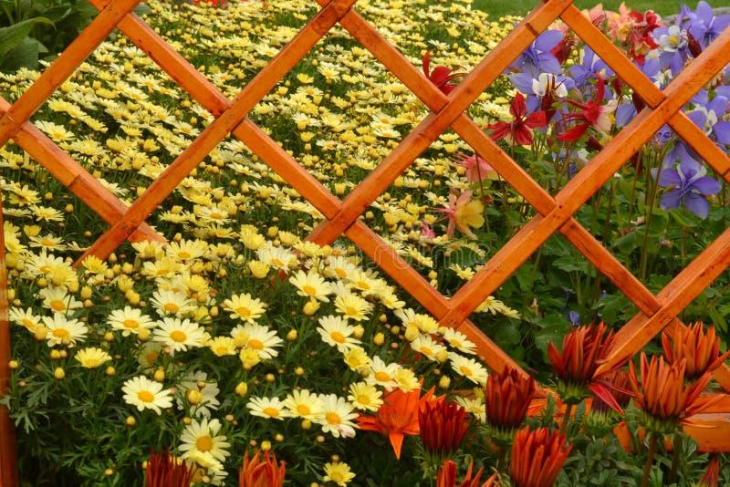 Floralies photo stock