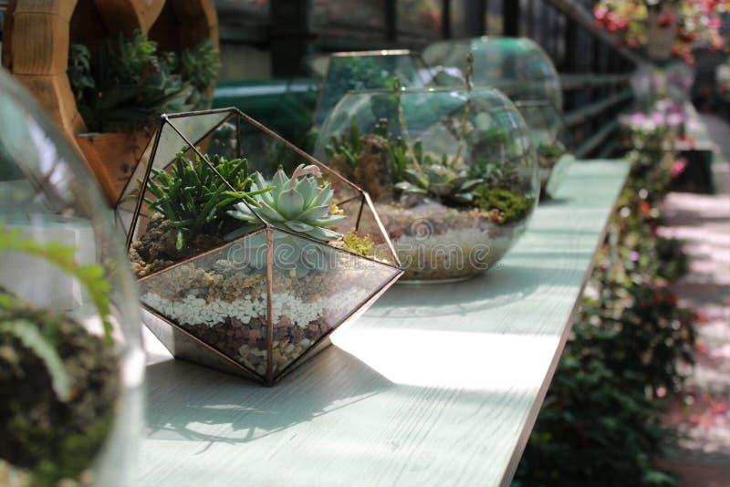 Florarium 免版税库存照片