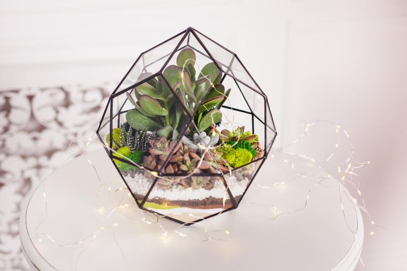 Florarium - composition of succulents, stone, sand and glass, element of interior, home decor royalty free stock photo
