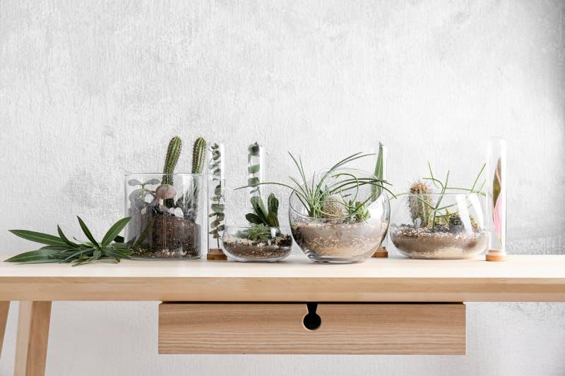 Florarium en los floreros de cristal con los succulents imágenes de archivo libres de regalías