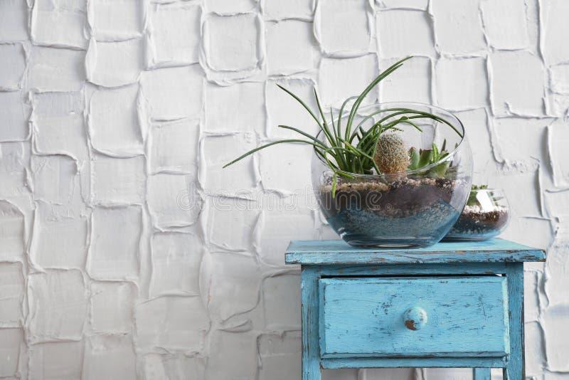 Florarium med suckulenter och kaktuns royaltyfri bild