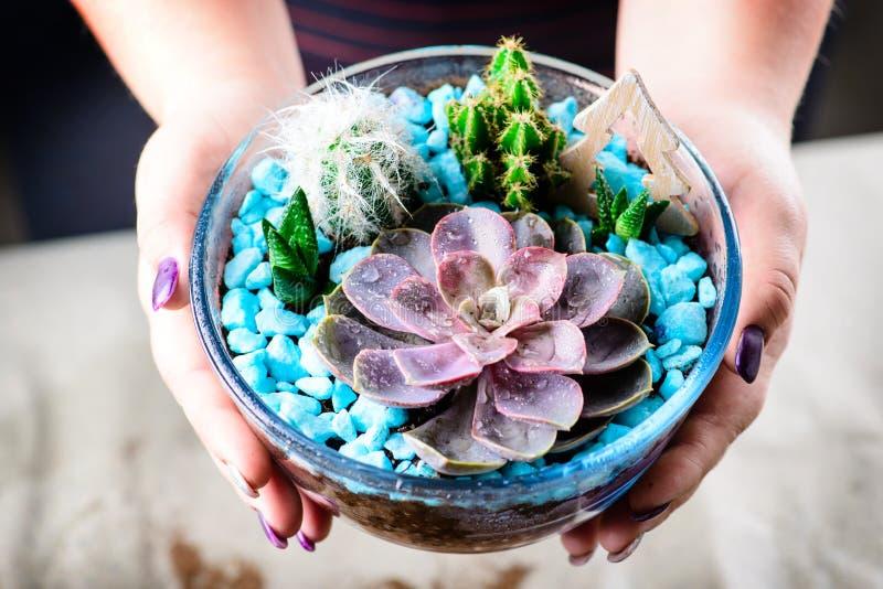 Florarium met succulents in vrouwelijke handen stock afbeelding
