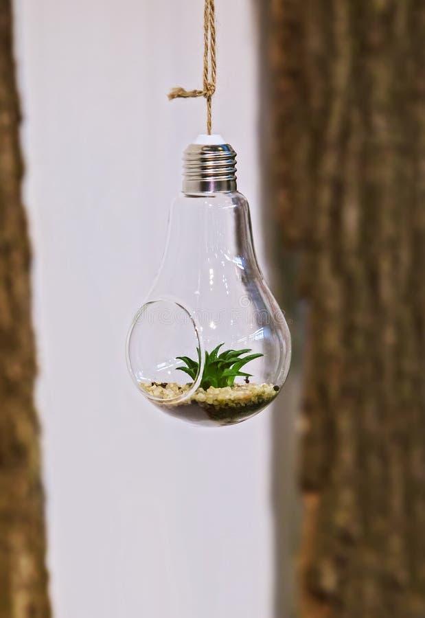 Florarium Plan rapproché d'une mini disposition succulente dans une ampoule accrochant sur une corde images libres de droits