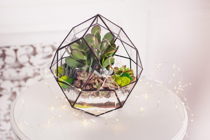 Florarium - skład sukulenty, kamień, piasek i szkło, element wnętrze, domowy wystrój zdjęcie royalty free