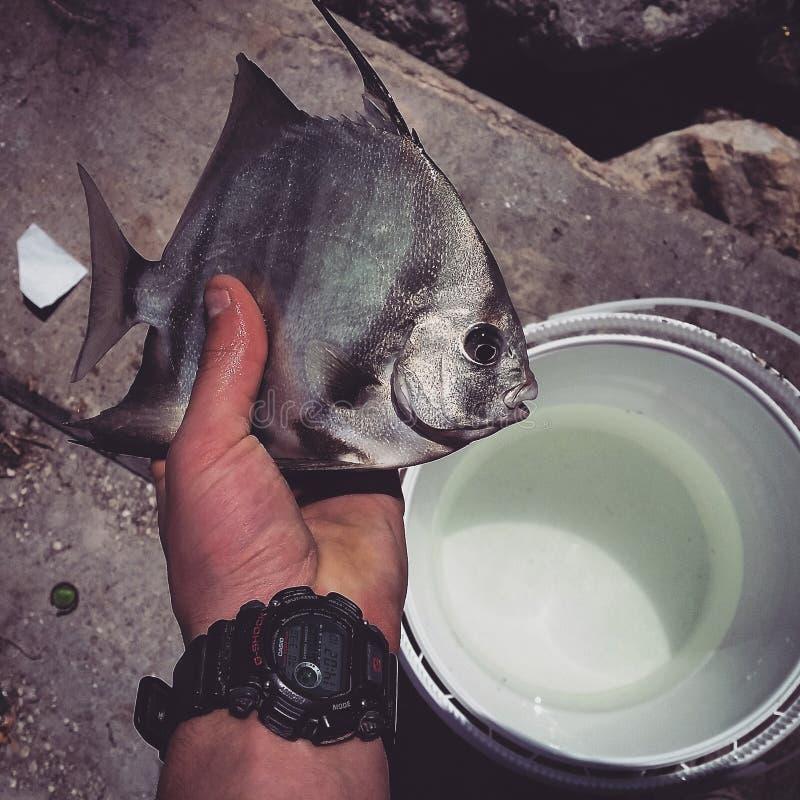 Flordia de pêche image stock