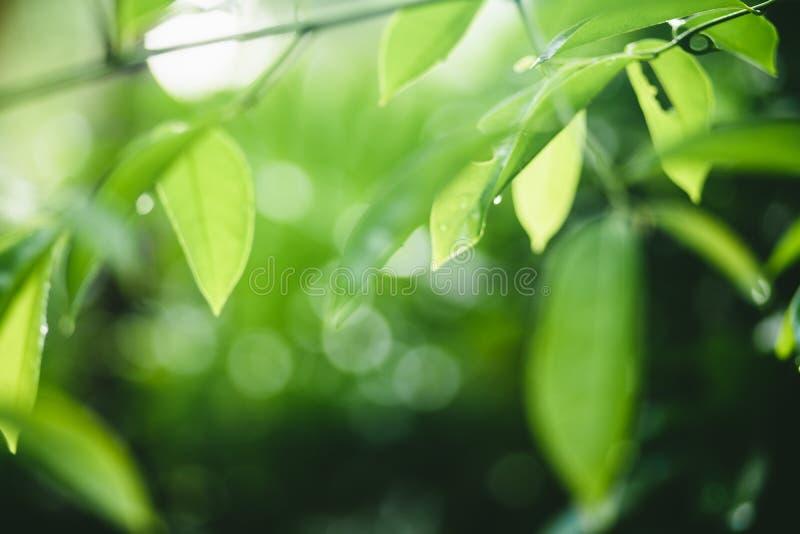 flore, arbre, feuille, naturelle, couleur, rouge, vert, fleur, florale, nature, fond, jardin, beauté, usine, belle photographie stock libre de droits