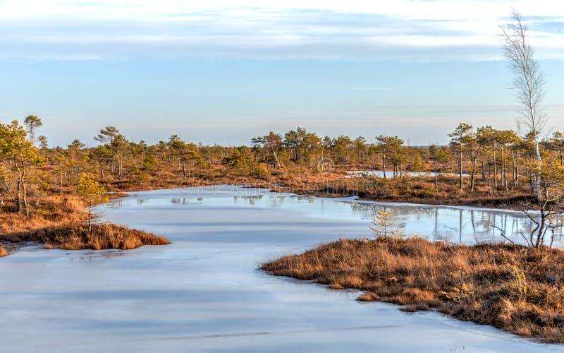 Flore colorée par automne du marais de tourbe d'hiver et de sa réflexion dans le lac congelé de marais, jour ensoleillé avec le c images libres de droits