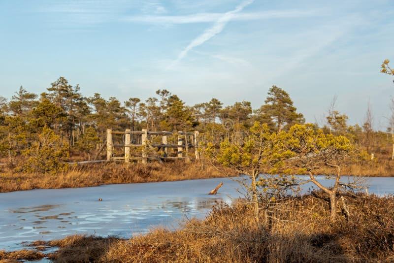 Flore colorée par automne du marais de tourbe d'hiver et de sa réflexion dans le lac congelé de marais, jour ensoleillé avec le c photos libres de droits