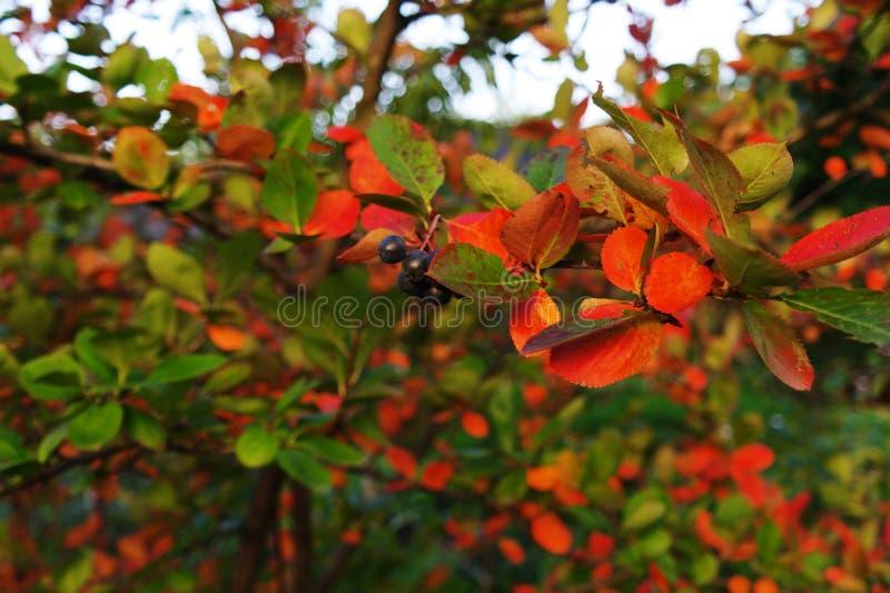 Flore d'automne photo stock