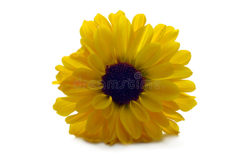 Flore - fleur jaune image libre de droits