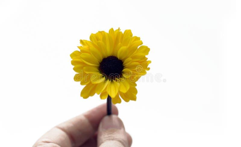 Flore - fleur jaune photo stock