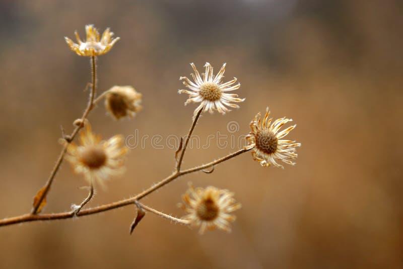 Flore sèche image stock