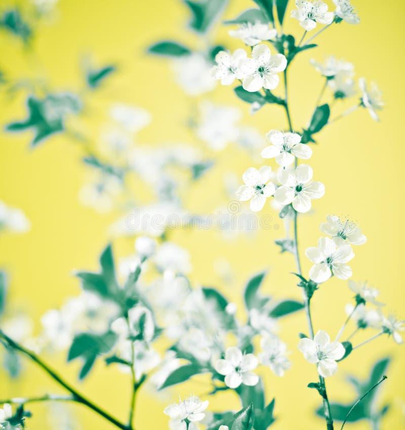 Floreale astratto immagini stock