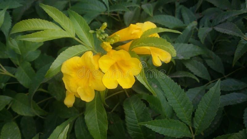 Florece amarillo natural del verde de la naturaleza fotos de archivo