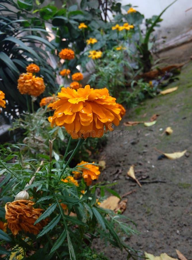 florece belleza en la naturaleza que da la sensación fresca imagen de archivo libre de regalías