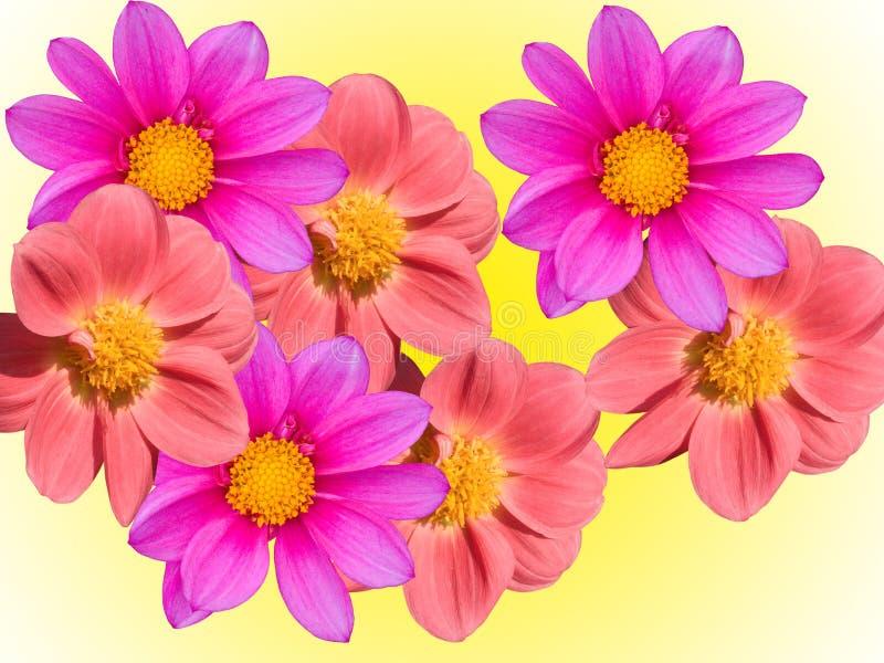 Download Florece decorativo imagen de archivo. Imagen de gérmenes - 7282373