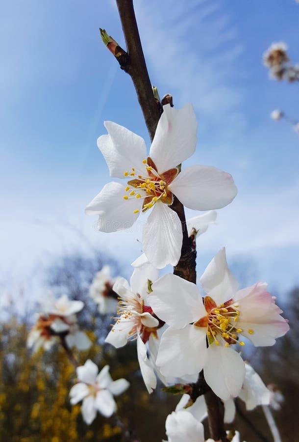 Florece el bloomig de la naturaleza imagen de archivo libre de regalías