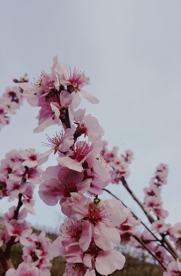 Florece el bloomig de la naturaleza foto de archivo libre de regalías