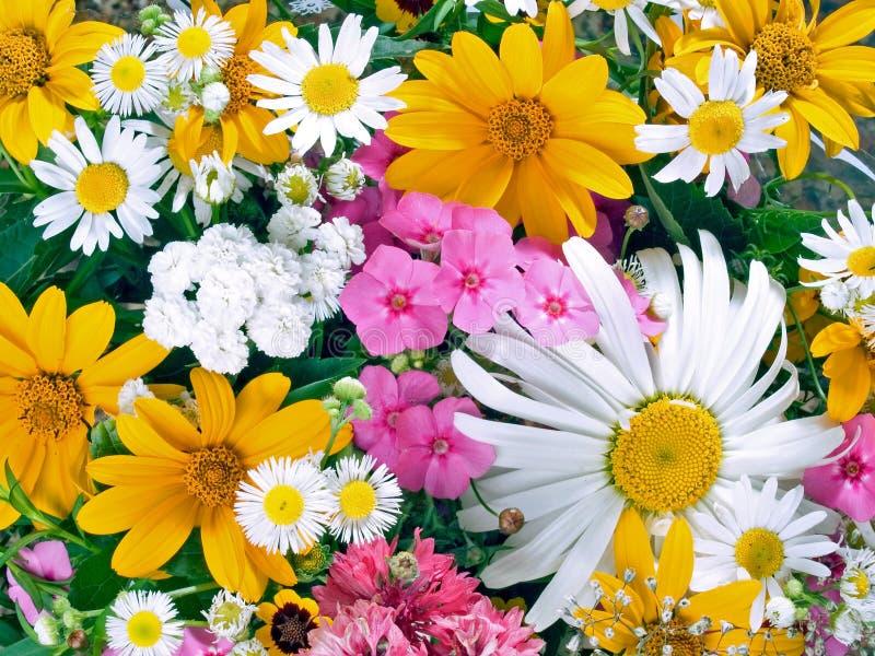 Florece el fondo. fotos de archivo