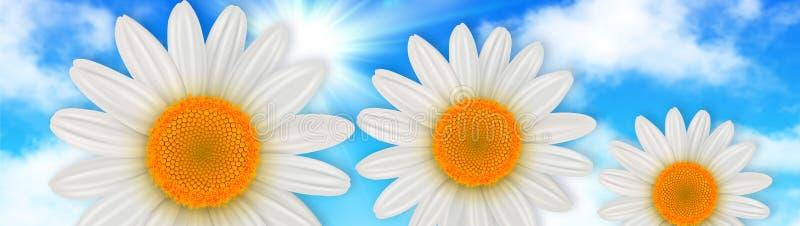 Florece el fondo, flores de la margarita sobre el cielo azul stock de ilustración