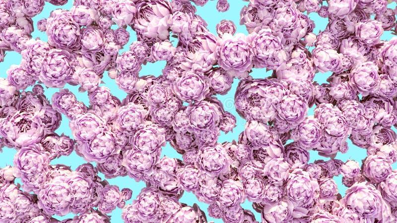Florece el modelo colorido de la decoración de los racimos de las peonías del fondo imagen de archivo libre de regalías