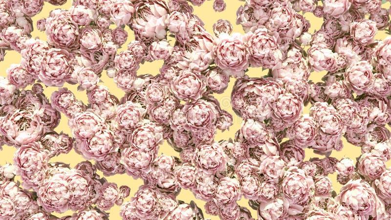 Florece el modelo colorido de la decoración de los racimos de las peonías del fondo imágenes de archivo libres de regalías