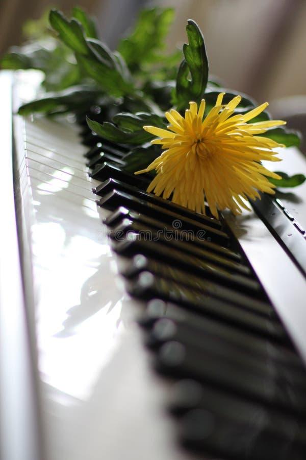 Florece el ramo hermoso para el día de fiesta imágenes de archivo libres de regalías