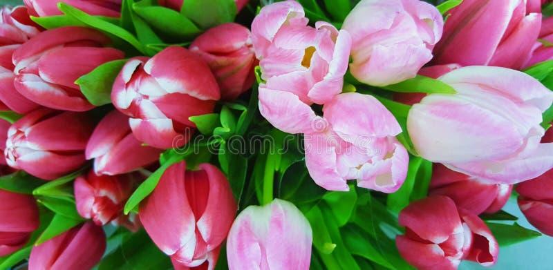 Florece el rosa del bloomig de la naturaleza hermoso imágenes de archivo libres de regalías