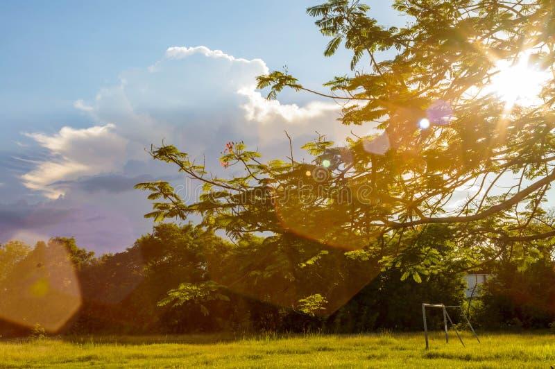 Florece follaje del pico del árbol imágenes de archivo libres de regalías