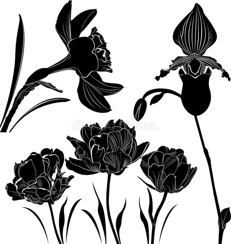 Florece la colección stock de ilustración