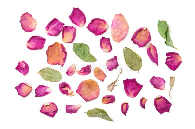 Florece la composición de flores color de rosa secadas Día del `s de la tarjeta del día de San Valentín Drie fotografía de archivo libre de regalías