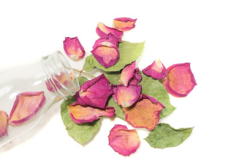 Florece la composición de flores color de rosa secadas Día del `s de la tarjeta del día de San Valentín Drie imagen de archivo libre de regalías
