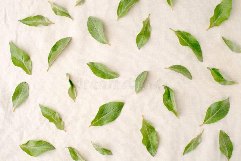 Florece la composición El modelo hecho de verde se va en el fondo blanco del tejido Endecha plana, visión superior fotografía de archivo
