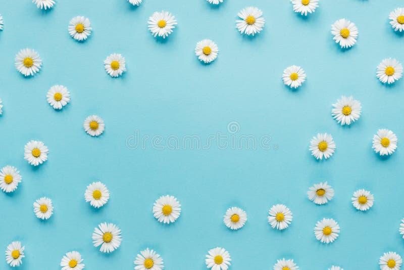 Florece la composici?n Cap?tulo de las flores de la manzanilla en fondo azul en colores pastel Primavera, concepto del verano imágenes de archivo libres de regalías
