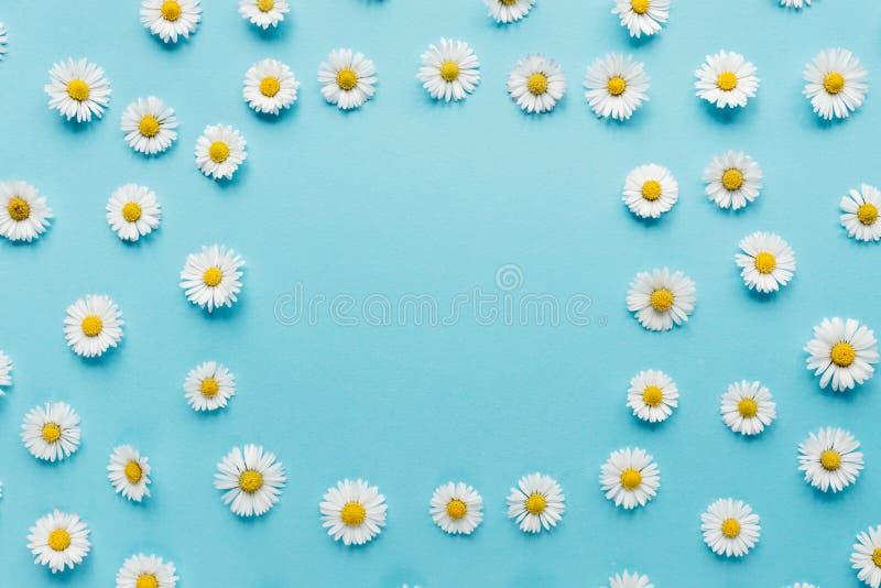 Florece la composici?n Cap?tulo de las flores de la manzanilla en fondo azul en colores pastel Primavera, concepto del verano imagenes de archivo