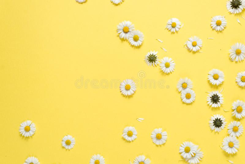 Florece la composici?n Flores de la manzanilla en fondo amarillo en colores pastel Primavera, concepto del verano imagen de archivo libre de regalías