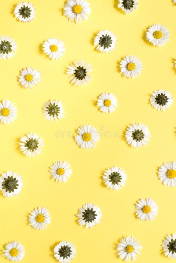 Florece la composici?n Flores de la manzanilla en fondo amarillo en colores pastel Primavera, concepto del verano imágenes de archivo libres de regalías
