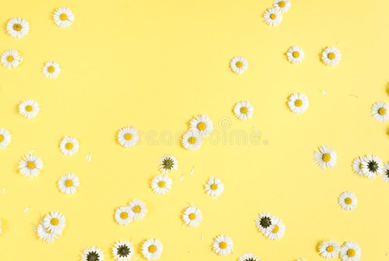 Florece la composici?n Flores de la manzanilla, p?talos en fondo amarillo en colores pastel Primavera, concepto del verano fotos de archivo libres de regalías