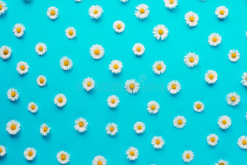Florece la composici?n Modelo hecho de las flores de la manzanilla en fondo azul en colores pastel Primavera, concepto del verano fotografía de archivo