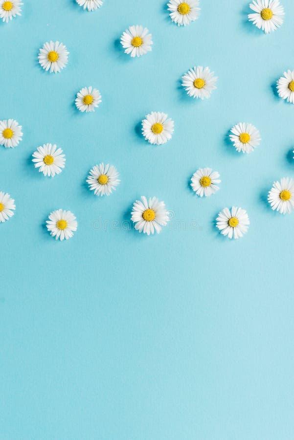 Florece la composici?n Modelo hecho de las flores de la manzanilla en fondo azul en colores pastel Primavera, concepto del verano fotos de archivo